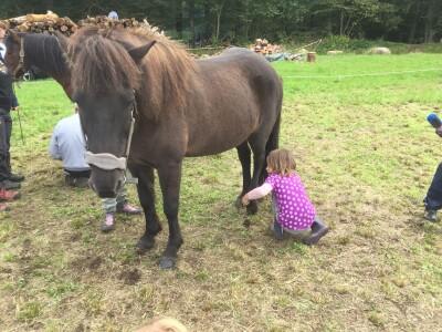 """Alle heste der deltog i Naturens dag, blev klappet, børstet og fik """"orndet"""" hove"""